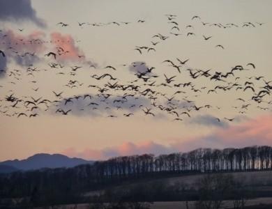 caccia alla lepre scozia Montefeltro