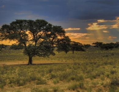 safari africa caccia in sudafrica caccia alle antilopi africa caccia grossa