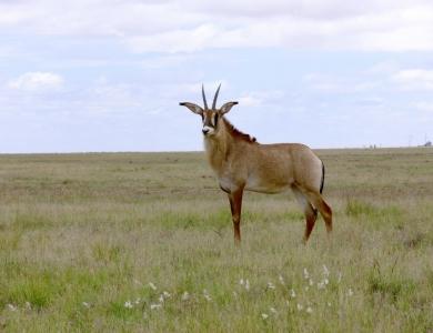 Caccia alle antilopi Burkina Faso Montefeltro Africa