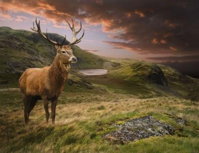 caccia al cervo in scozia montefeltro