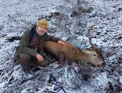 cervo rosso caccia al cervo in Scozia Montefeltro royal stag