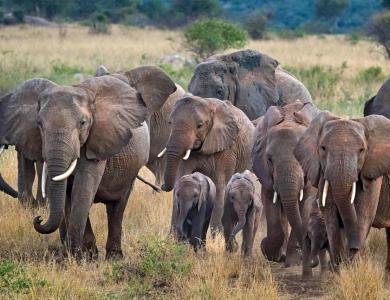 Montefeltro viaggi caccia elefante