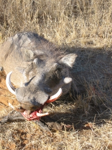 viaggi caccia africa sudafrica Montefeltro facocero medaglia
