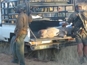viaggi caccia africa sudafrica Montefeltro