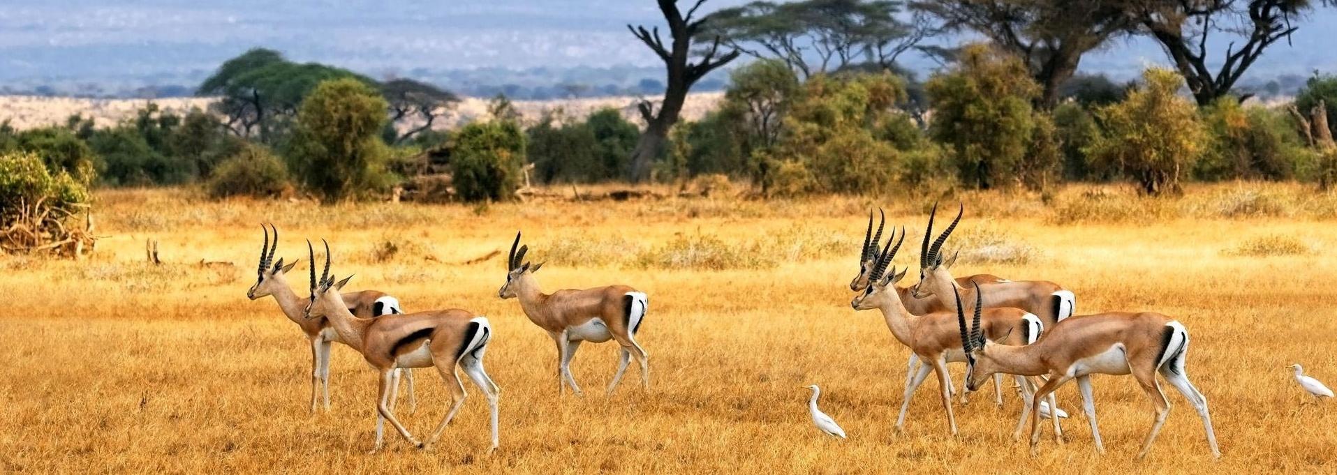 caccia in Africa Montefeltro viaggi di caccia sudafrica