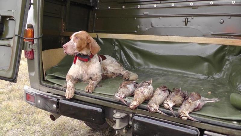 caccia alla beccaccia in crimea Montefeltro vacanze di caccia viaggi