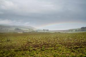 viaggi di caccia in scozia caccia ai colombacci colombaccio scozia Montefeltro