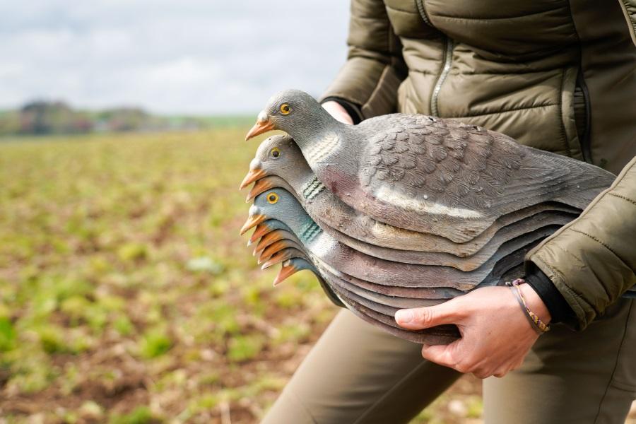 scozia caccia ai colombacci