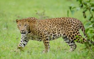 caccia grossa in Zimbabwe Montefeltro