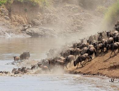 caccia in Tanzania Montefeltro