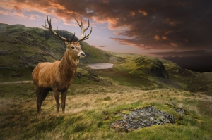 hunting trips viaggi di caccia al cervo in scozia montefeltro