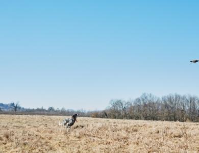 riserva di caccia vagante la stoppa montefeltro