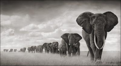 caccia elefante zimbabwe Montefeltro caccia grossa africa