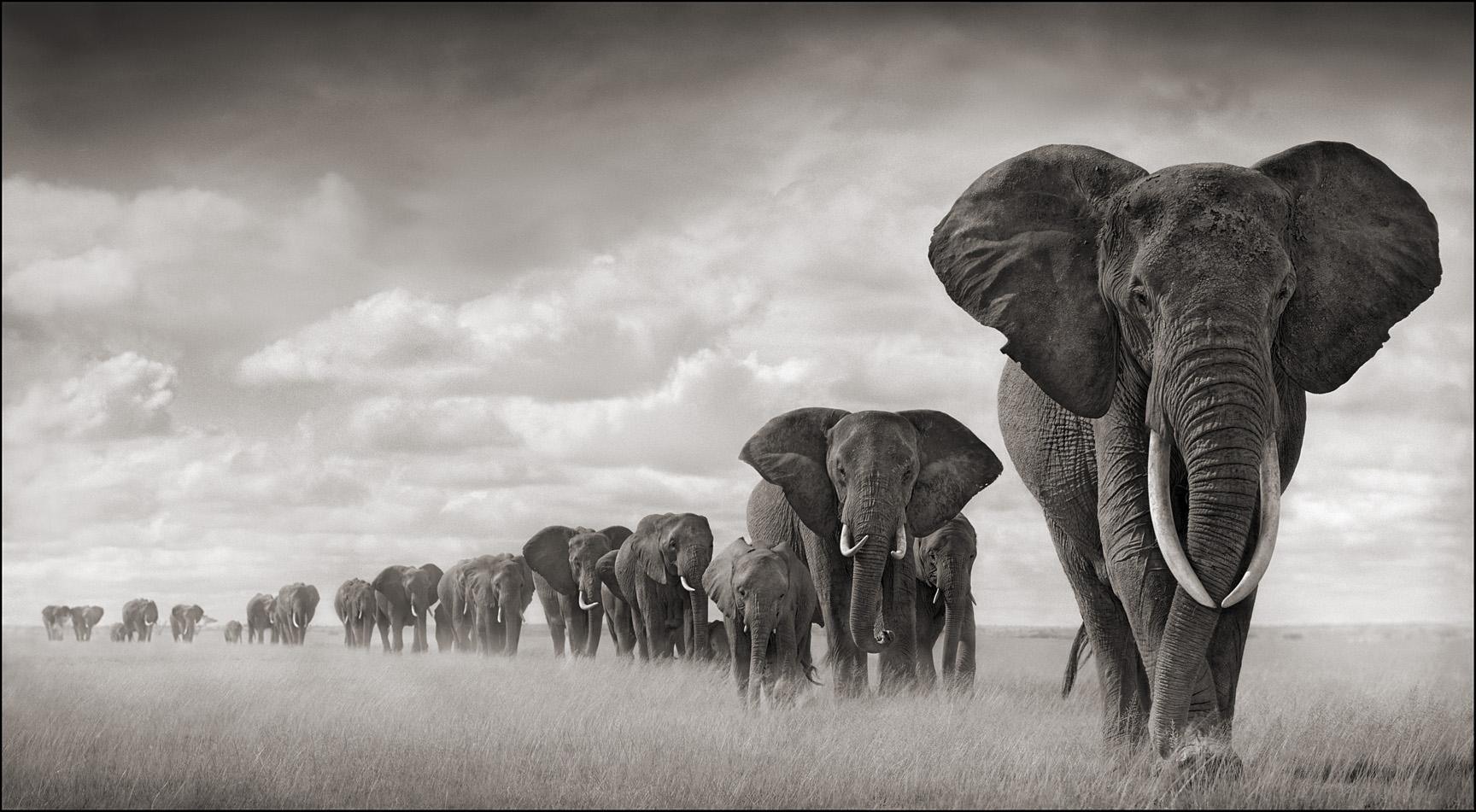 caccia agli elefanti zimbabwe Montefeltro