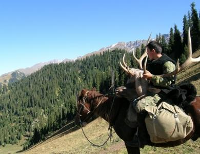 cacciatore maral caccia al cervo kazakistan ibex Montefeltro viaggi di caccia