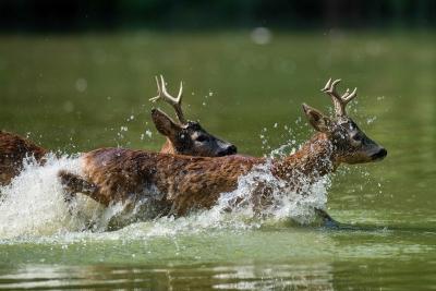 caccia al capriolo scozia Montefeltro viaggi di caccia