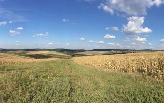 caccia in Romania allodole migratoria anatre Montefeltro viaggi di caccia