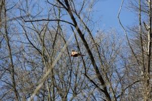 ricerca di caccia viaggi di caccia montefeltro 1