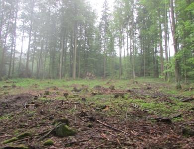 battuta caccia in romani caccia al cinghiale viaggi di caccia montefeltro 2