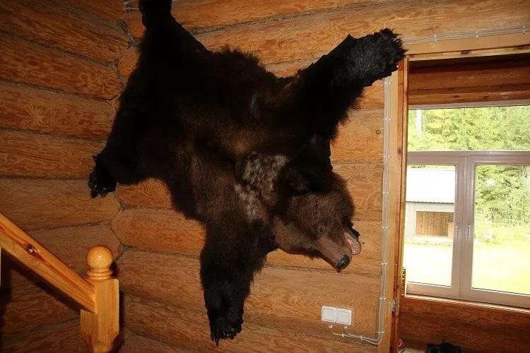 viaggi di caccia orso