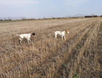 caccia in macedonia