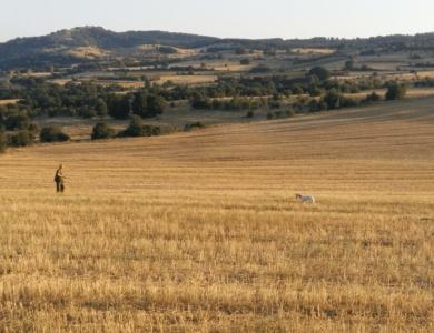 caccia alla quaglia in macedonia
