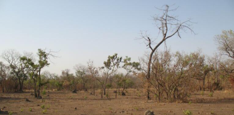 viaggio caccia in africa senegal caccia grossa montefeltro 4