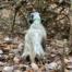viaggi di caccia con il cane