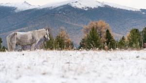 caccia al cervo