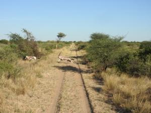 viaggio venatorio in africa cosa portare in valigia