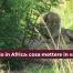 viaggio venatorio in africa preparare al meglio la valigia