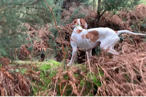caccia con cane in crimea
