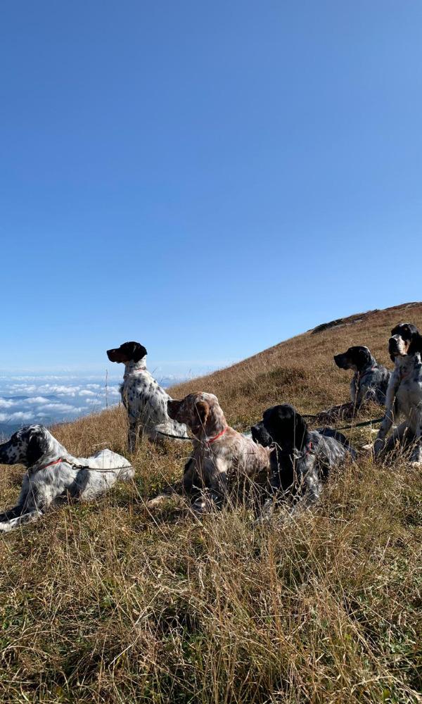 caccia con cane isola di bute