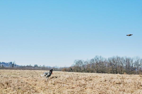 caccia in intalia