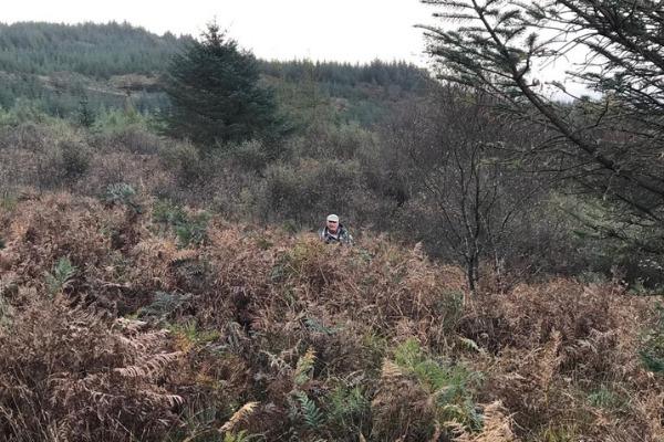 caccia al cervo in scozia