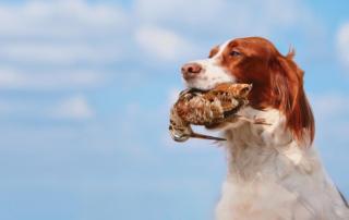 trasporto cani