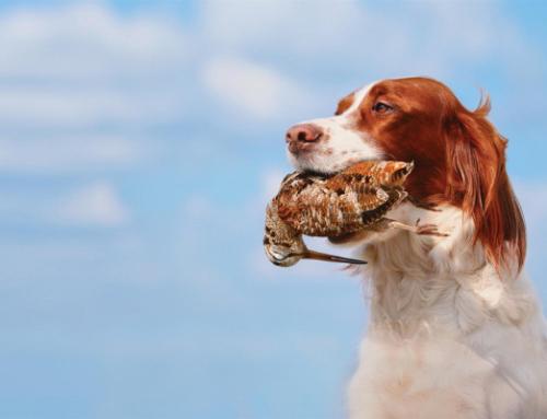 Come avviene il trasporto cani verso una destinazione di caccia all'estero?