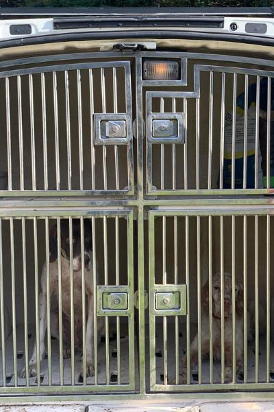 gabbia trasporto cani