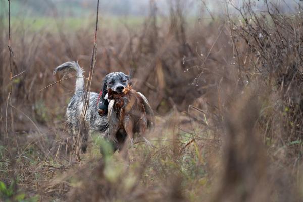 a caccia con montefeltro tour venatorio