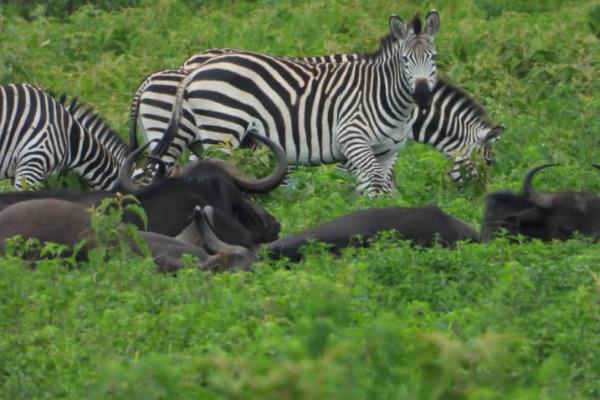 hunting trip in tanzania
