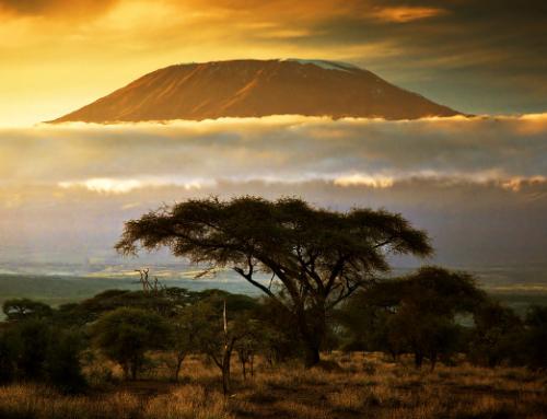 Un nuovo anno, un nuovo viaggio di caccia in Tanzania.