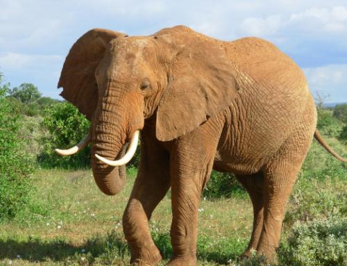 Caccia all'elefante. Vivi le tue entusiasmanti avventure!