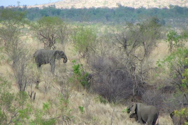 elefanti nello zimbabwe