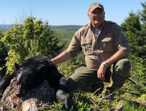 Caccia all'orso: dove vivere questa fantastica avventura venatoria?