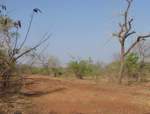 Viaggi venatori: vivi la caccia in Senegal