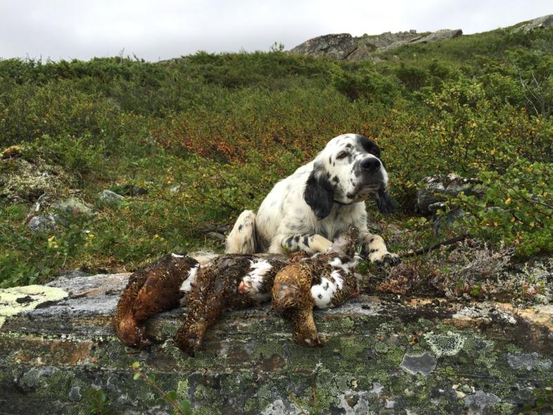 caccia alla piccola selvaggina