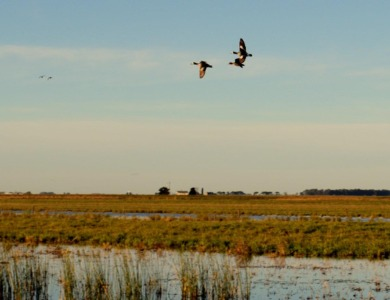 caccia in argentina