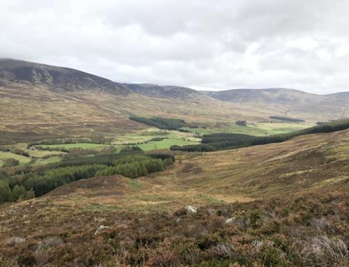Caccia al Cervo Rosso: vivi un sogno venatorio nella verde Scozia
