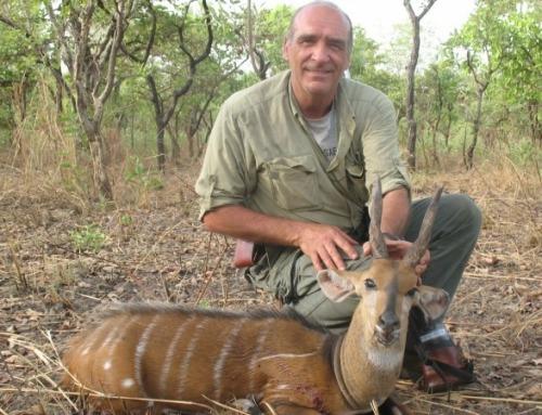 Novità: caccia in Cameroun!