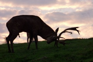 caccia al cervo Bulgaria